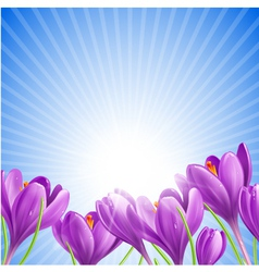 Flowers in spring vector image vector image