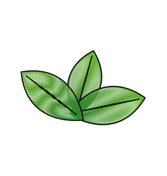 fresh green mint leaves herbal drink icon vector image