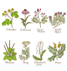 colored set of medicinal plants in hand-drawn vector image