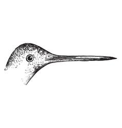 Hummingbird beak vintage vector