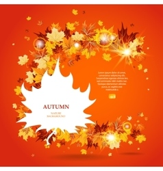 Maple leaves bright background vector