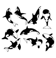 Set killer whales collection stylized orca vector