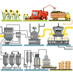 sunflower oil production process stages vector image