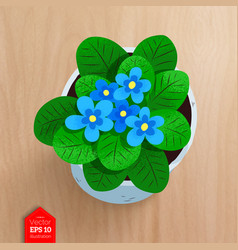 top view of flower in pot vector image