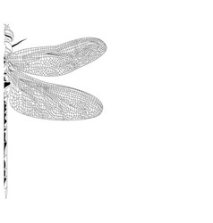 elegant partial dragonfly insect detailed sketch vector image vector image