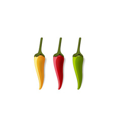 red hot chili pepper vector image vector image