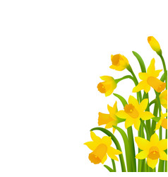 spring narcissus vector image vector image
