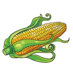 fresh ripe ear corn cartoon isolated object vector image