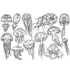 hand drawn jellyfish set sea collection vector image