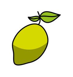 mango fresh fruit drawing icon vector image