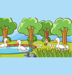 scene with ducks in park vector image