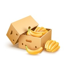 Cardboard box with banana vector image vector image