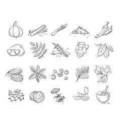 Doodle spices and herbs hand drawn set vector