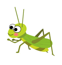 Grasshopper animal cartoon character vector