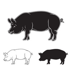 hand drawn pig set vector image