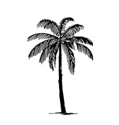 hand drawn sketch of palm logo vector image