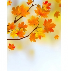 autumn falling leaves vector image vector image