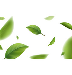 Blurred green leaves flying in white background vector