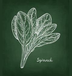 Chalk sketch spinach vector