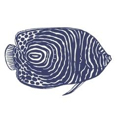 Emperor angelfish vector