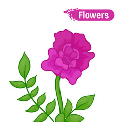 Purple abstract blooming flower vector