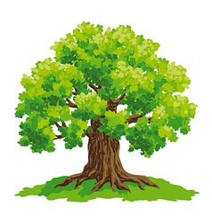 Oak with lush green crown vector image vector image