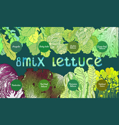 8-mix lettuce vector