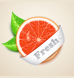 fresh grapefruit vector image