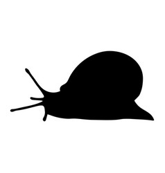 grape snail silhouette isolated on white backgroun vector image