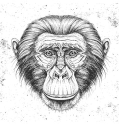 Hipster animal monkey hand drawing muzzle vector