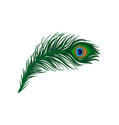Long emerald-green feather of peacock plumage of vector