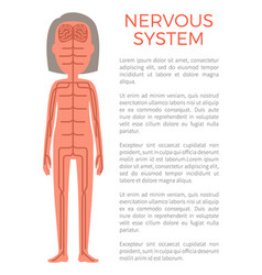 Nervous system poster and text vector