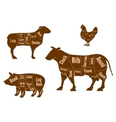 Chicken pork beef and lamb meat cuts scheme vector image
