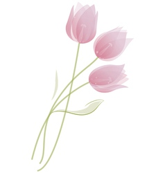 bouquet of tulips vector image vector image