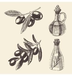 Olive Branch Bottle Set Hand Drawn vector image vector image