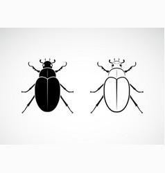 cockchafer melolontha melolontha isolated on vector image