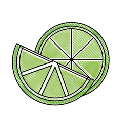 Fresh lemon and slice citrus ingredient drink vector
