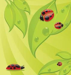 lady bugs vector image vector image