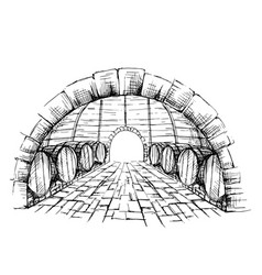 Wine cellar with barrels vector