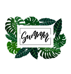 summer brush lettering vector image