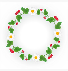a wreath of viburnum decorated with daisies vector image