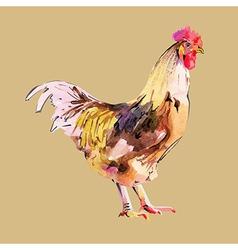 Watercolor painting bird cock vector