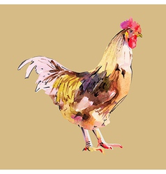Watercolor painting of bird cock vector