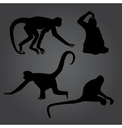 monkey shadows silhouette set eps10 vector image vector image