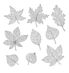 drawn autumn set with oak maple beech sketch vector image