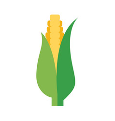 flat corn cob vector image