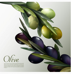abstract olive branches poster vector image