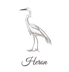 heron is a sketch drawing vector image vector image