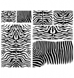 zebra skins vector image vector image