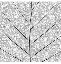 Botanical series elegant leaf structure vector